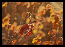 Autumn colours 2 by Alexandra35