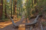 Muir Woods Trail III - Exclusive HDR Stock by somadjinn