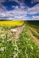 Yellow Blue And Green by DL-Photography
