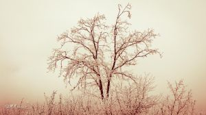 Lonely by mnoruzi