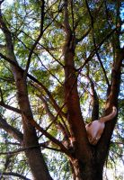 Up in a tree by plainordinary1