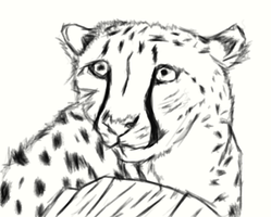 Cheetah Sketch by EpicCatLover