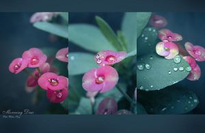 Morning Dew by poetry2capullet