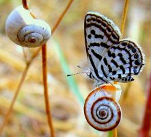 Butterfly_689454 by nurisagaltici