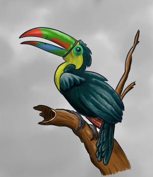 Toucan challenge by JCCabs