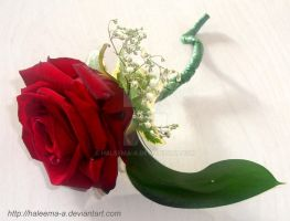 Red rose buttonhole by Haleema-A