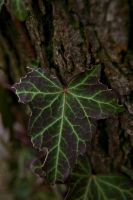 Kryptonite Leaf by CauterizeSetsFire