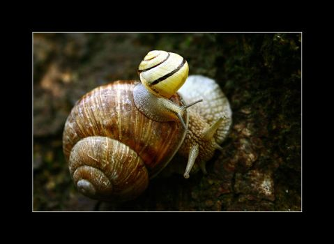 Snails love by Ciril