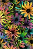 colorful flowers by lalisa-doniho