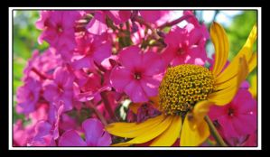 Yello and Pink by Dean-McDonald