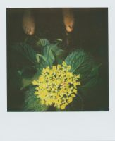 Macrophylla And Feet by JillAuville
