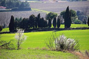 Near Limoux by Gerfer