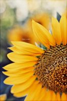 Sunflower by TheLevenCreations