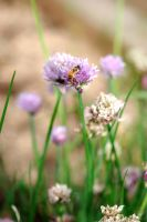 Bee In The Chives by kawaiimon