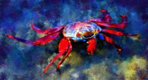 a Red Crab in Blue Waters by fmr0