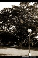 Ang Lamp Post by Delinquente
