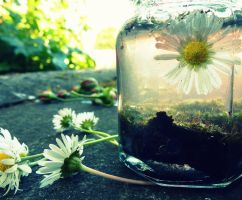 Daisy Jar by GERARDwayFORlife