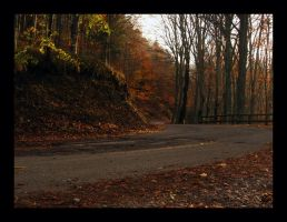 Su strade autunnali - In some autumnal way by lorenzo84