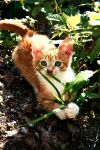 Kitty by ViRPo