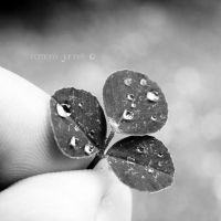 .little things. by romankaa-jurinak