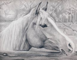 horse by NatasaTW