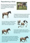 Reposition a horse tutorial by RSmales