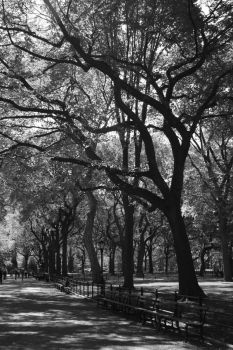 A Walk in the Park by marniewerner