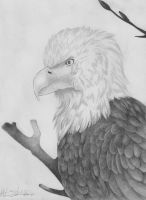 Graphite Eagle by selunca