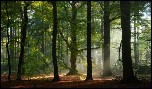 Remembering the October forest by jchanders