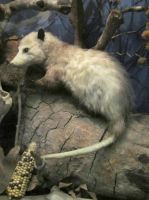Taxidermy 1 by chamberstock
