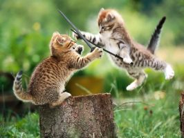 Cat Fight by BunnyDeathPunch