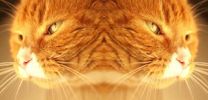 Simba in Stereo by AndySimmons
