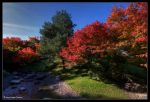 Fall Colors by stetre76