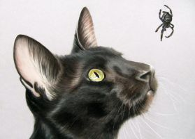 Oriental shorthair cat with Spider drawing. by mo62