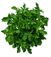 Shrub 02 PNG.. by Alz-Stock-and-Art