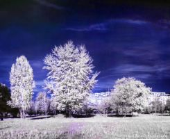 A Winter Tale   IR by HDRenesys