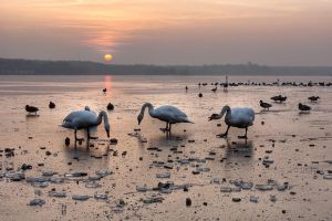 "the ""swan""-set - Tychy by shade-pl"