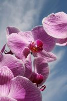 Orchid by nicola-b-stock