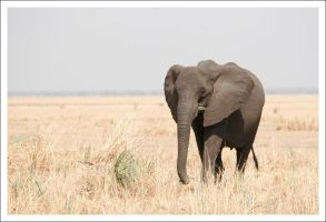 Elephant - 3302 by eight-eight