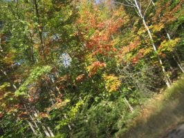 Fall Foliage - 23 by ShadowManipulator7