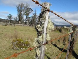 Rusty Fence by molbags