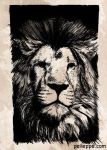 Lion by peileppe