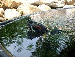 water turtle by MiCiA-DeSign