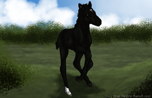 PHR Night Chronicles 2227 - Foal registration by Pine-Hollow-Ranch