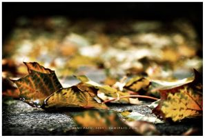 Once I dreamt of autumn by Irreality