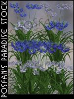African Lily Garden by poserfan-stock