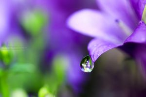 DROPLET V by wenr