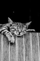 Sleepy Kitten. Monochrome. by johnwaymont