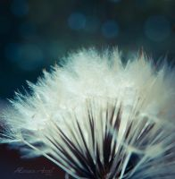 Softness by Alessia-Izzo