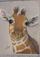 young giraffe by RabidPuppy101